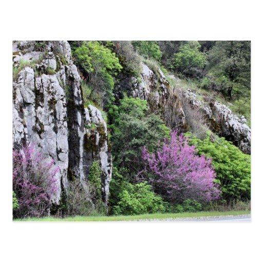 Flores y rocas tarjetas postales