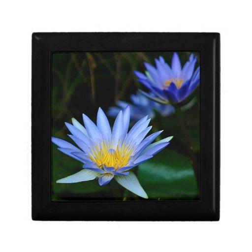 Flores y significado de loto hermosas cajas de joyas