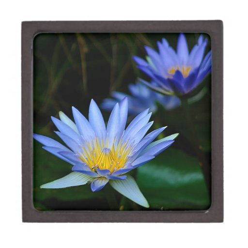 Flores y significado de loto hermosas caja de recuerdo de calidad