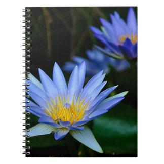 Flores y significado de loto hermosas libretas