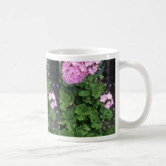 Flores zonales rosadas del geranio (Pelargonium Ho Taza De Café