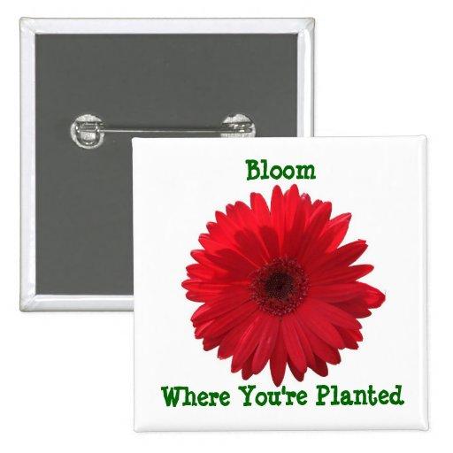 Florezca donde usted está botón plantado del cuadr