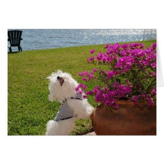 Florezca donde usted está imagen plantada de la tarjeta de felicitación