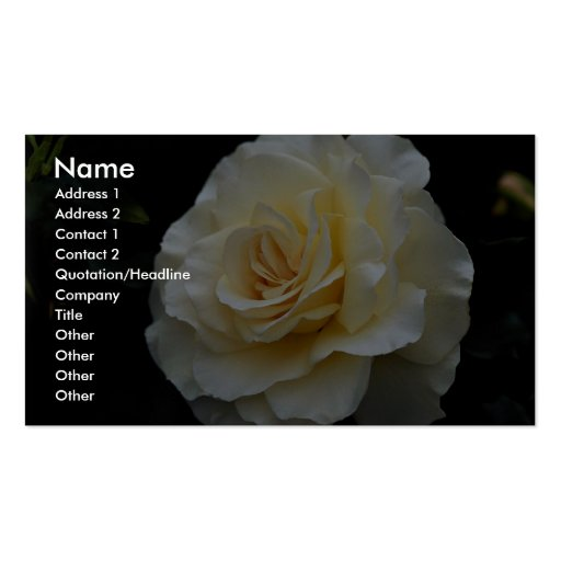 Floribunda 'French Lace' Roses Double-Sided Standard Business Cards (Pack Of 100)