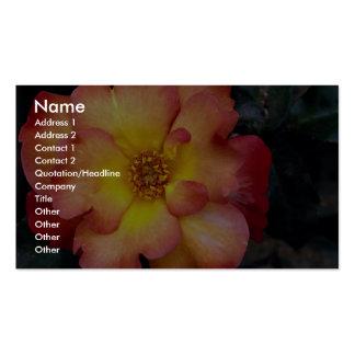 Floribunda hermoso 'Orangeade Plantillas De Tarjetas Personales