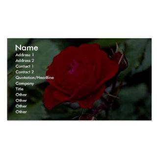Floribunda precioso 'Europeana Tarjetas Personales