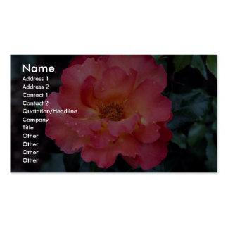 Floribunda precioso 'Orangeade Tarjeta De Negocio