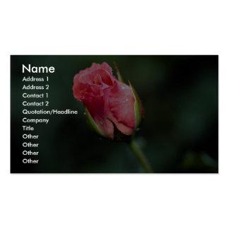 Floribunda precioso 'Pleasure Tarjeta De Visita