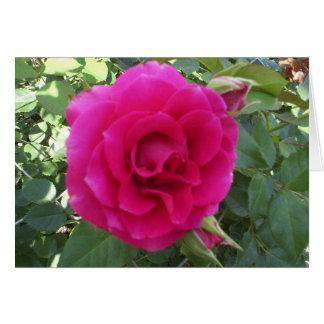 Floribunda Rose Card