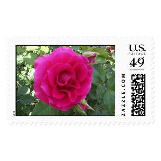 Floribunda Rose Postage Stamps