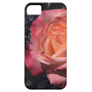 Floribunda Rose Sheila's Perfume iPhone SE/5/5s Case