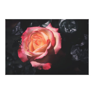 Floribunda Rose Sheila's Perfume On Canvas