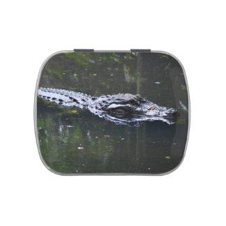 florida alligator head in water candy tin