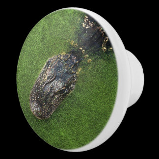 Florida Alligator • Nature Photo Kitchen Knob /