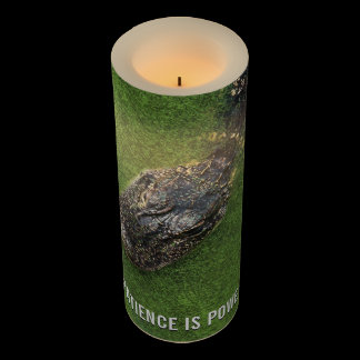 Florida Alligator • Patience is Power • Nature Flameless Candle