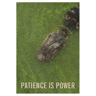 Florida Alligator • Patience is Power • Nature Wood Poster