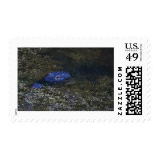 Florida Alligator Postage