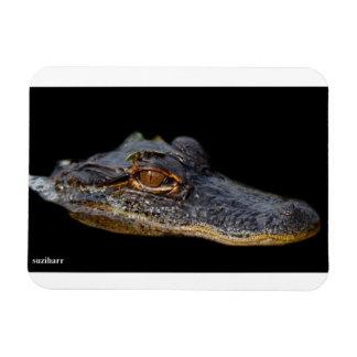Florida Alligator Rectangular Photo Magnet