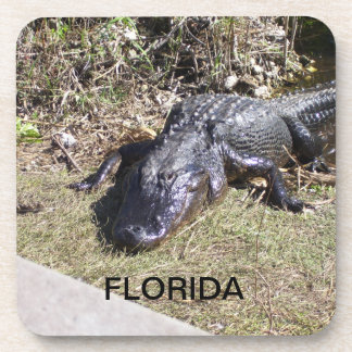 Florida Alligator Resting in the Everglades Drink Coaster