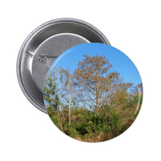 Florida Bald Cypress on a swampy ranch 2 Inch Round Button