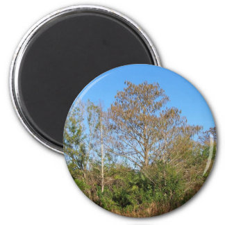 Florida Bald Cypress on a swampy ranch 2 Inch Round Magnet