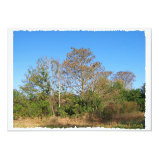 Florida Bald Cypress on a swampy ranch 5x7 Paper Invitation Card