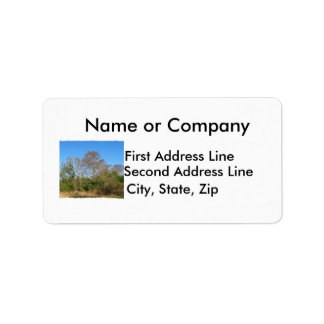 Florida Bald Cypress on a swampy ranch Address Label