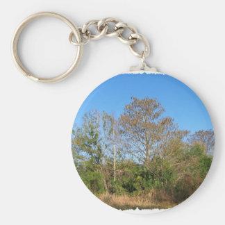 Florida Bald Cypress on a swampy ranch Basic Round Button Keychain