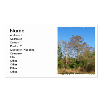 Florida Bald Cypress on a swampy ranch Double-Sided Standard Business Cards (Pack Of 100)