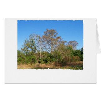 Florida Bald Cypress on a swampy ranch Greeting Card