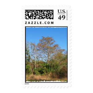 Florida Bald Cypress on a swampy ranch Postage