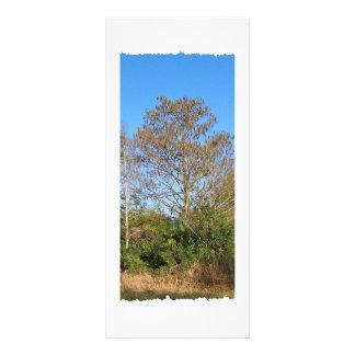 Florida Bald Cypress on a swampy ranch Rack Card
