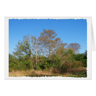 Florida Bald Cypress on a swampy ranch Stationery Note Card