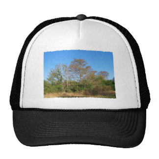 Florida Bald Cypress on a swampy ranch Trucker Hat
