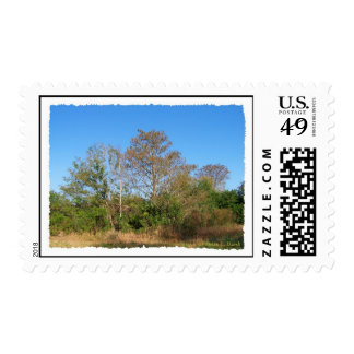 Florida Bald Cypress scene in a swamp Postage Stamp