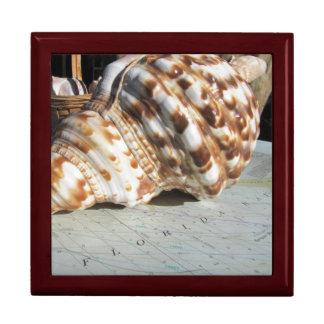 Florida Bay Sea Shell Trinket Box