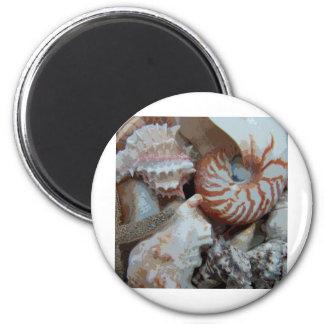 Florida Beach shells Magnet