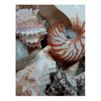 Florida Beach shells Postcards