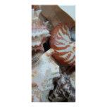 Florida Beach shells Rack Card Design