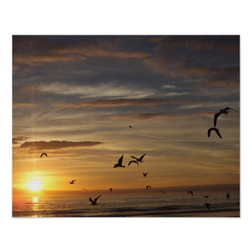 Florida Beach Sunset with Birds Poster