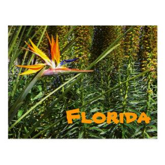 Florida Bird of Paradise Postcard