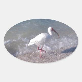 Florida birds oval sticker