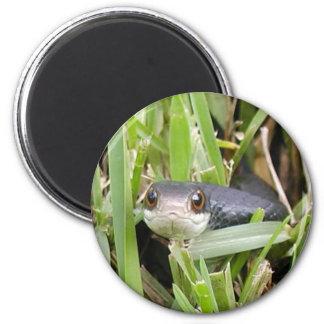 Florida Black Racer Magnet
