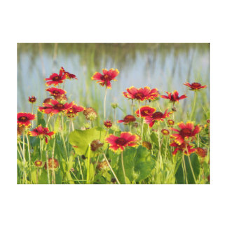 FLORIDA BLANKET FLOWERS Canvas Print