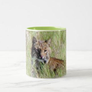 Florida Bobcat Mug