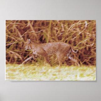 Florida Bobcat Poster