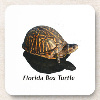 Florida Box turtle Photograph w Text Coasters
