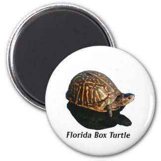 Florida Box turtle Photograph w Text magnet
