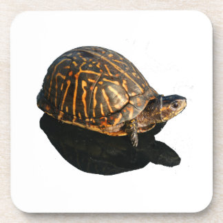 Florida Box turtle Photograph with Shadow Cutout Coaster