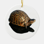 Florida Box turtle Photograph with Shadow Cutout Ornaments